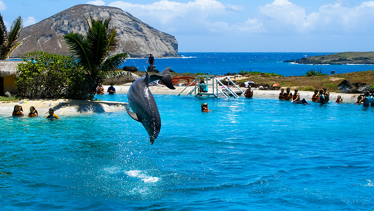 Top Places To Swim With Dolphins Honeymoon Dreams Blog