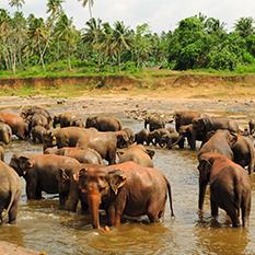 Phuket Half-Day Safari - Thumbnail