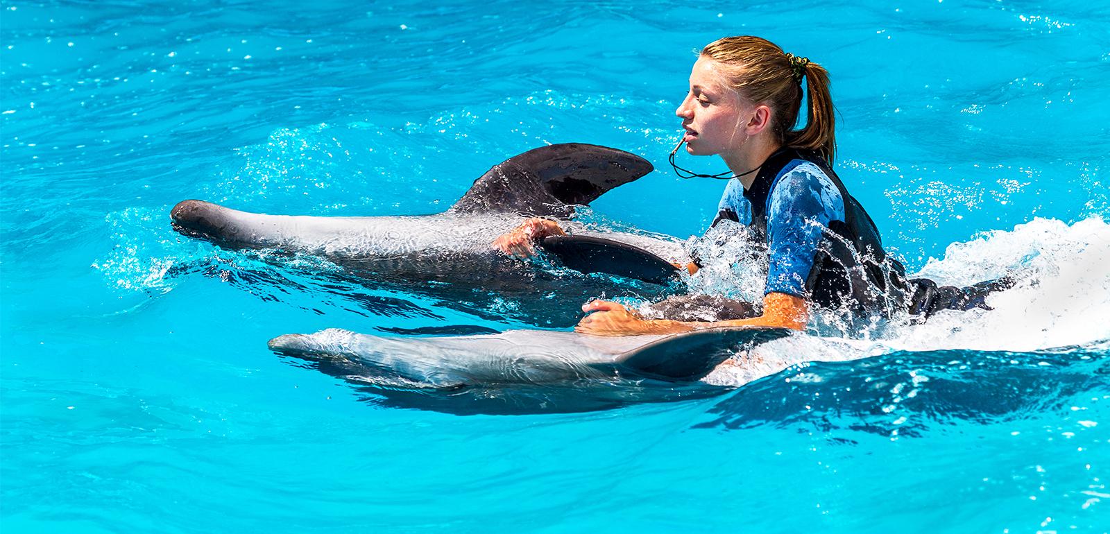 Swim With Dolphins Honeymoon Dreams Honeymoon Dreams