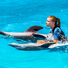 Swim with Dolphins thumbnail