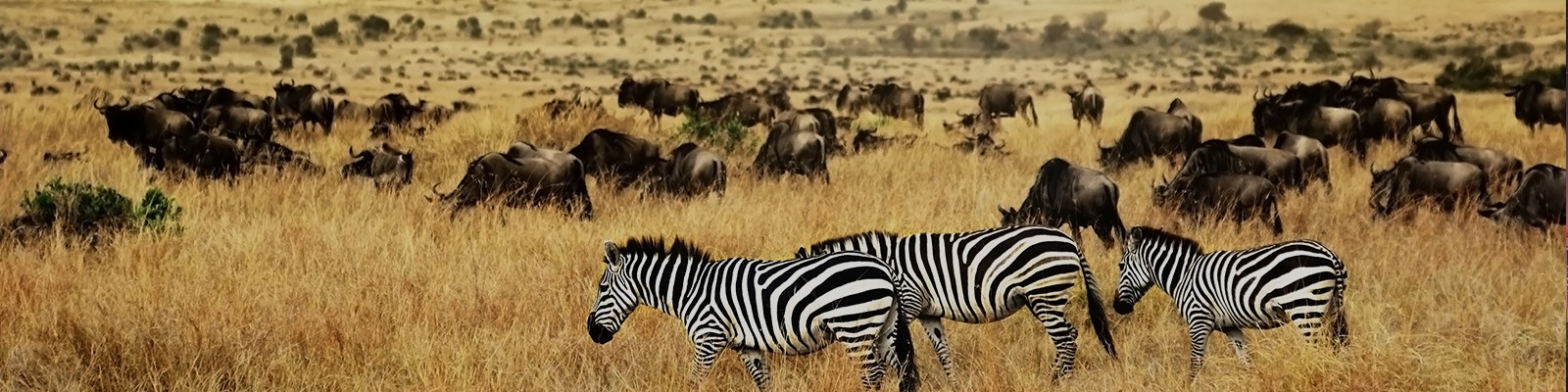 kenya safari honeymoon packages header