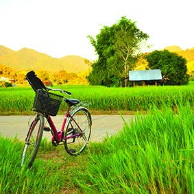 Bali Eco Cycling tour - Honeymoon Dreams - Thumbnail