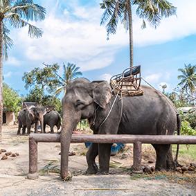 Koh Samui Island Eco Safari Tour - Thailand Honeymoon excursions - Thumbnail