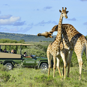 Shamwari Game Reserve - South Africa Sarai Honeymoon - thumbnail