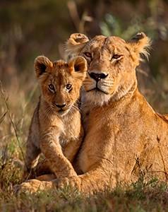 kenya - Safarimoons