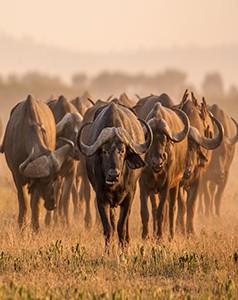 tanzania- Safarimoons