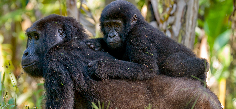 Bwindi Impenetrable National Park - Top Safaris for your honeymoon