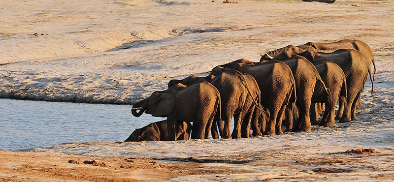 Hwange National Park - Top Safaris for your honeymoon