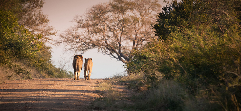 Kruger National Park - Top Safaris for your honeymoon