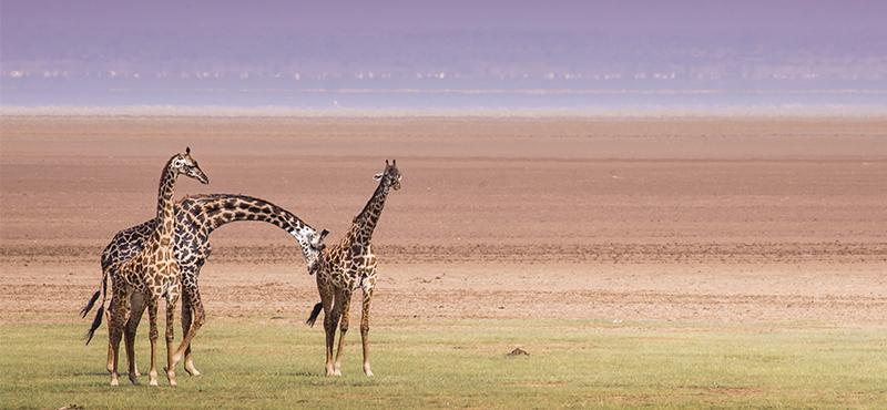 Lake Manyara National Park - Top Safaris for your honeymoon