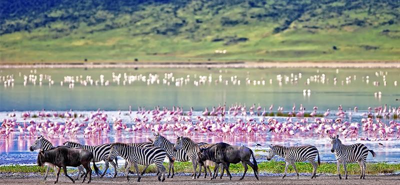 Maasai Mara - Top Safaris for your honeymoon
