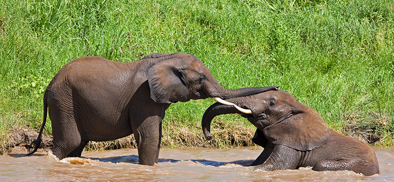 Tarangire National Park - Top Safaris for your honeymoon