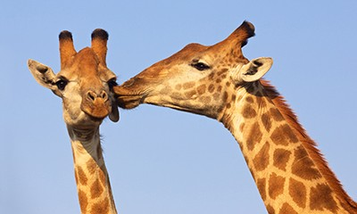Top Safaris for your honeymoon