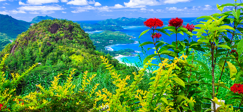 botanical gardens - 5 things you must see on your seychelles honeymoon - luxury seychelles honeymoon packages