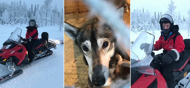 husky - abbie visits lapland - lapland honeymoon packahes