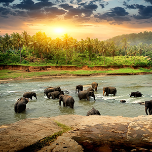 sri lanka honeymoon packages - thumbnail